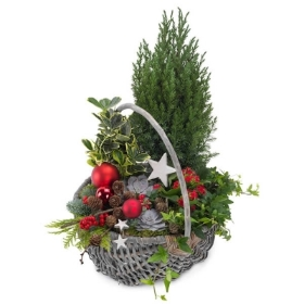Winter planted basket